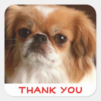 Klistermärkear för hälsning för hund för fyrkantigt klistermärke