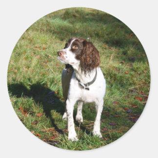 Klistermärkear för hund för SpringerSpaniel Runt Klistermärke