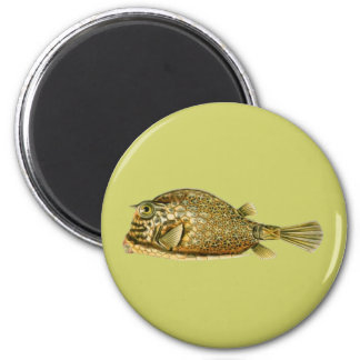 Klottrad Cowfish Magnet