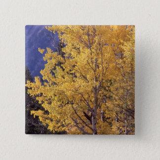 Knäppas asp- trädpinback för nedgången standard kanpp fyrkantig 5.1 cm
