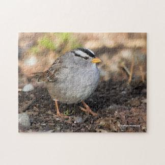 Knubbig Vit-Krönad Sparrow i vintersolen Pussel