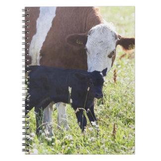 Ko och kalv anteckningsbok med spiral