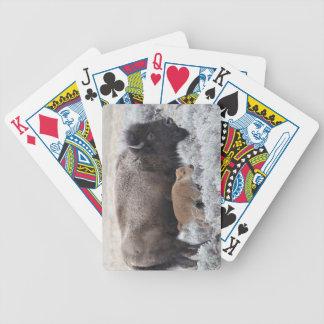 Ko- och kalvBison, Yellowstone 2 Spelkort