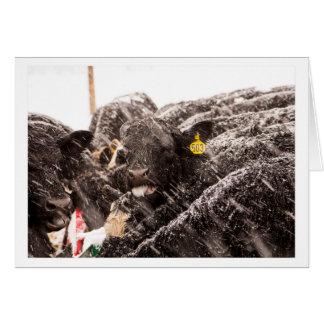 Ko som fångar snöflingor på tungahelgdagkort hälsningskort