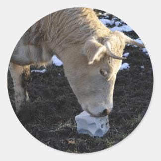 Ko som som slickar ett salt kvarter runt klistermärke