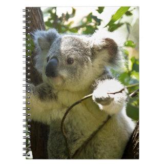 koala anteckningsbok med spiral