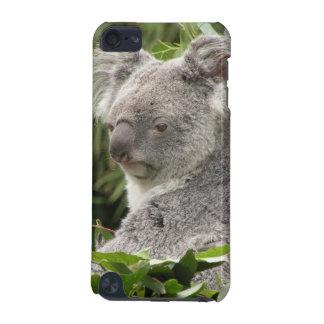 Koalabjörn