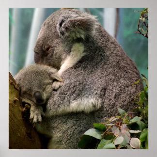 Koalamamma och nyfödd bebis poster