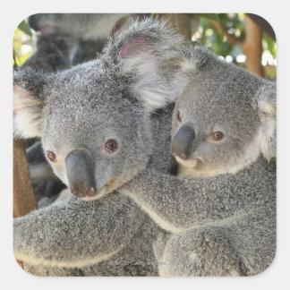KoalaPhascolarctoscinereus Queensland. Fyrkantigt Klistermärke