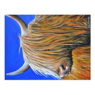 Koboltblått, den höglands- coo.en vykort