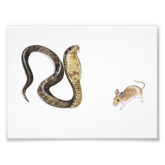 Kobra vs råtta fotontryck