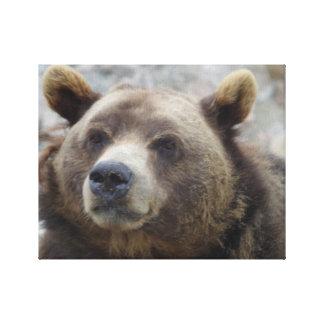 KodiakbjörnCloseup Canvastryck
