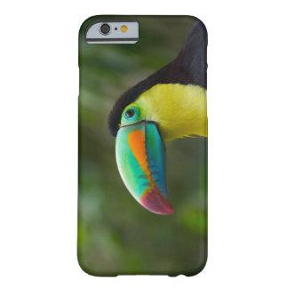 Köl-fakturerat toucan på trädgren, Panama Barely There iPhone 6 Skal