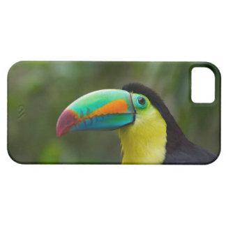 Köl-fakturerat toucan på trädgren, Panama iPhone 5 Fodraler