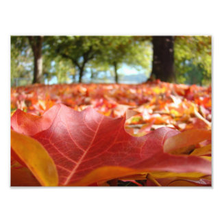 konst 8x10 skrivar ut naturfotografihöst löv fotografiskt tryck