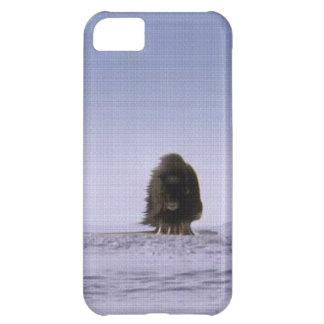 Konst för djurliv för Bovines för arktiska iPhone 5C Fodral