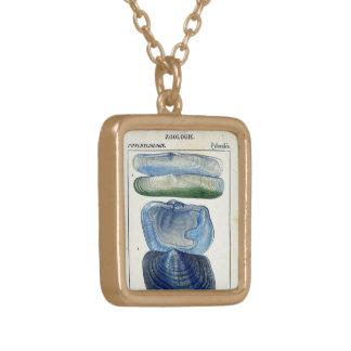 konst för strand för blåttsnäckskalvintage guldpläterat halsband
