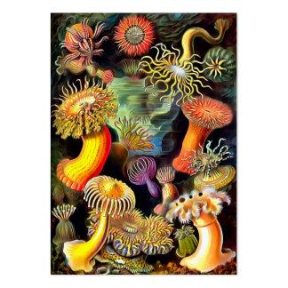 Konst för vintage för Ernst Haeckel havsanemoner Set Av Breda Visitkort