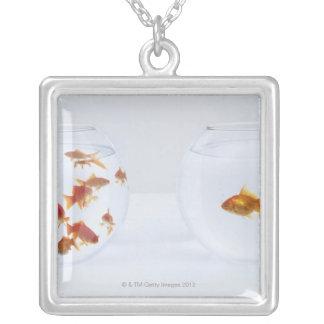 Kontrast av många guldfisk i fishbowl och silverpläterat halsband