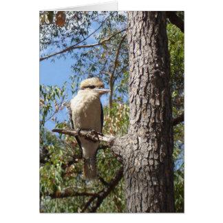 Kookaburra i träd hälsningskort