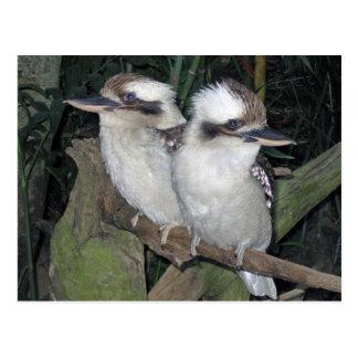 Kookaburras vykort