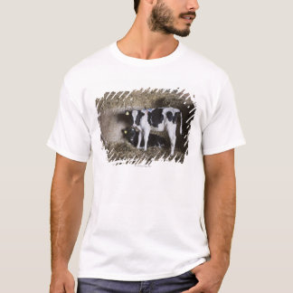 Kor i ladugård 3 tee shirts