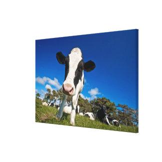 Kor som matar på, betar 2 canvastryck