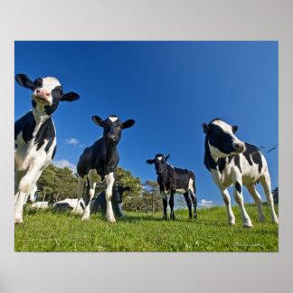 Kor som matar på, betar posters