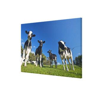 Kor som matar på, betar canvastryck