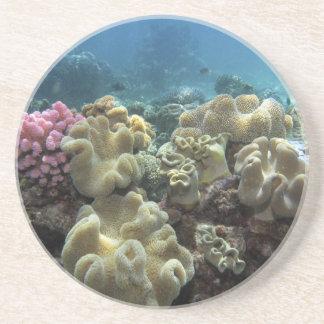 Korall Agincourt rev, underbar barriärrev, Underlägg Sandsten