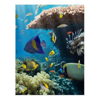Korall och fisk i det röda havet, egypten vykort