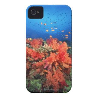 Korall och fisk iPhone 4 skydd