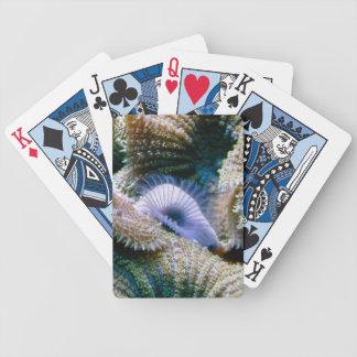 Koralldäckkort Spelkort