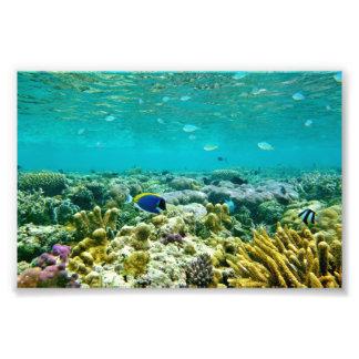 Korallrev Fototryck