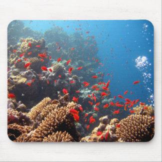 Korallrev Musmatta