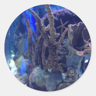 Korallrev Runt Klistermärke