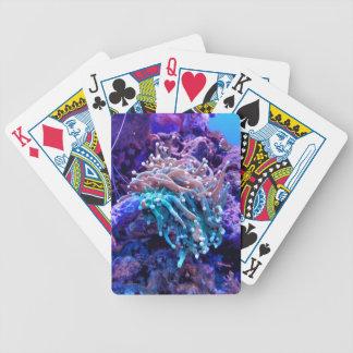 korallrev spelkort