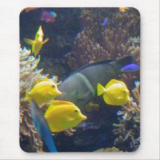 Korallrevfisk Musmatta