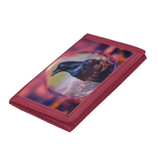 Korpsvart i en dekorativ plånbok för jordklot