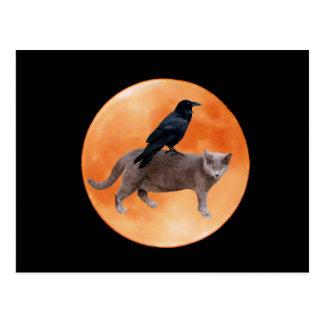 Korpsvart månevykort för katt vykort