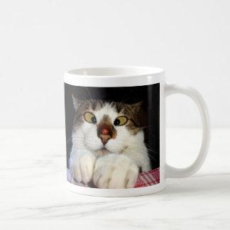 Korsad synad katt och nyckelpiga kaffemugg