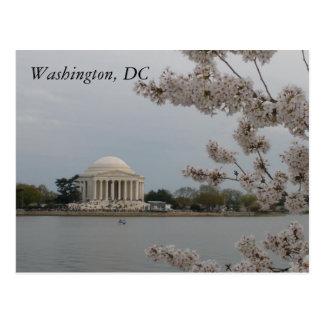 Körsbärblommar: Washington D.C. Vykort