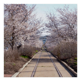 Körsbäret blomstrar och spårar Philadelphia Poster