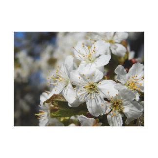 körsbärsröd blommar canvastryck