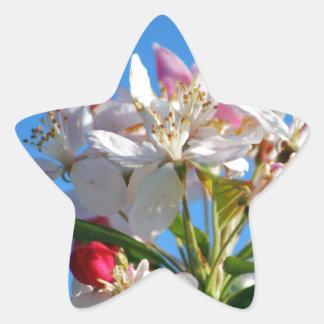 Körsbärsröd blommar för strålpunkt stjärnformat klistermärke