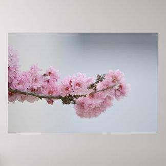 Körsbärsröd blommargren poster