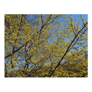Körsbärsröd dogwood- och blå himmelblommigt för vykort