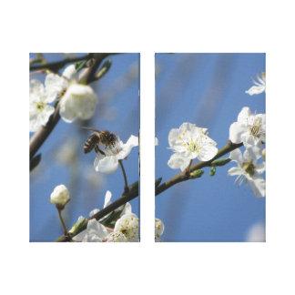 Körsbärsröda blommar canvastryck