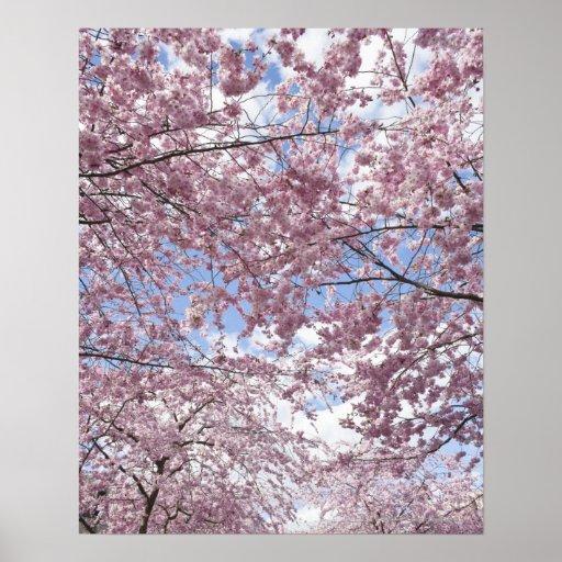 Körsbärsröda träd i blommar print