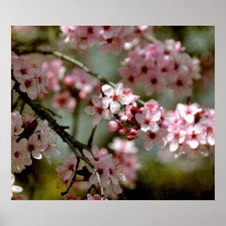 Körsbärsrött blommarträd poster